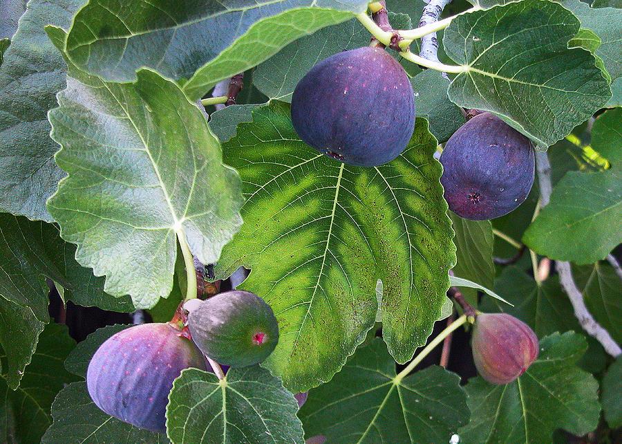 Плоды Святой Земли