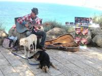 jaffa-street-photo-musician