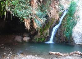 Эйн Геди – оазис в Иудейской пустыне