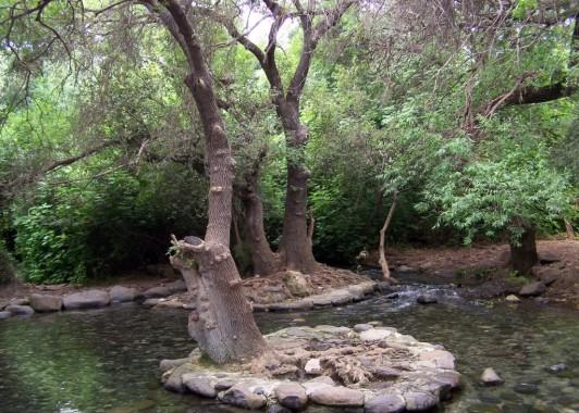 Национальный парк Дан на севере Израиля (3)