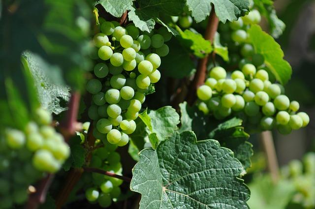 wine-green