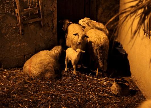 Загон для овец на Пастушьем поле.
